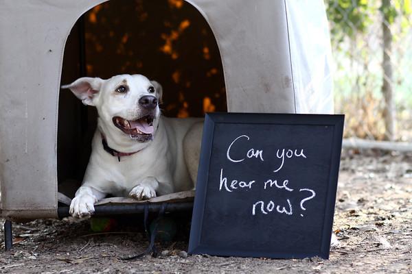 Big Dog Campaign 2012