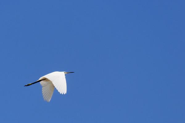 Reserva Natural da foz do guadiana- Algarve