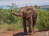 Young elephant sniffing us