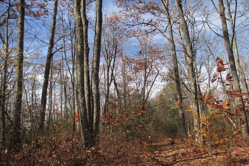 Big Green Trail - 4,180'