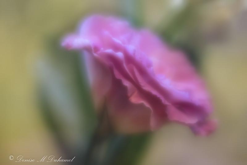 DMD_3405-Edit.jpg