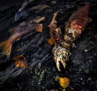 Alaska 2011- Kenai River