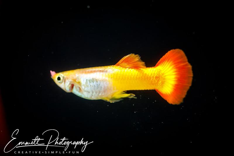 20200208-Fish-4.jpg