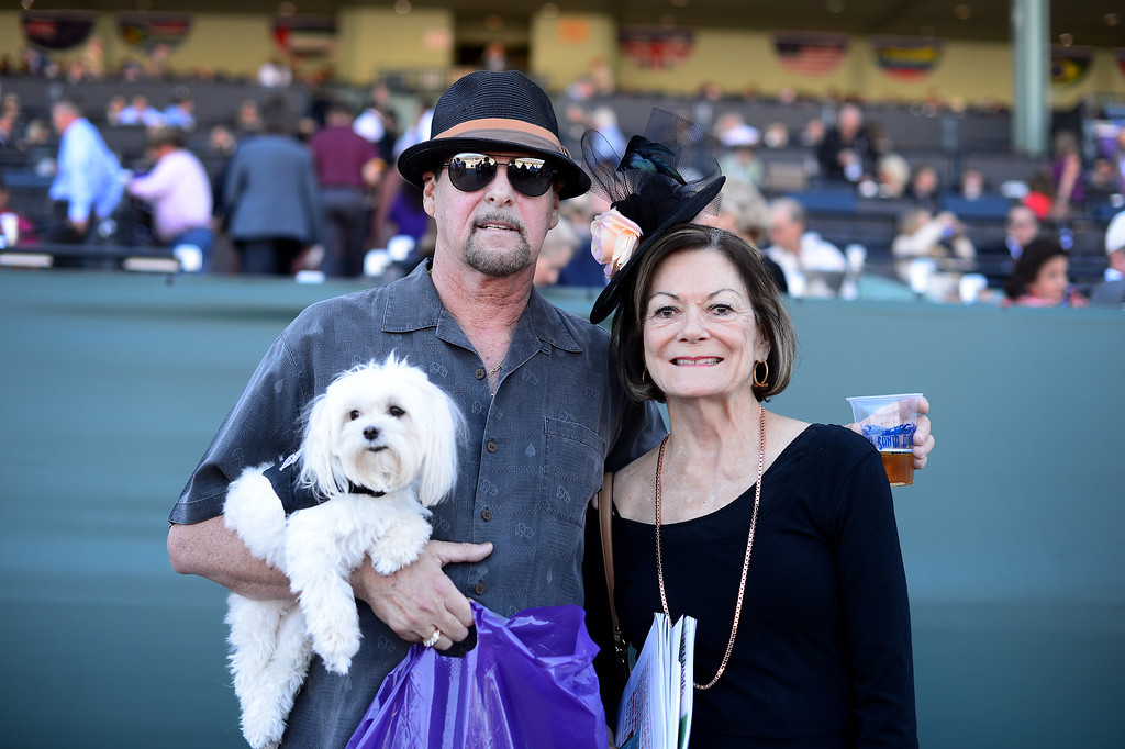 ". Thomas Smith and his fiancé Cathy Heywood and their service dog Munchie, of San Bernadino, during the Breeders\' Cup at Santa Anita Park in Arcadia Friday, November 1, 2013. Heywood says the service dog ""keeps them calm.\"" (Photo by Sarah Reingewirtz/Pasadena Star-News)"