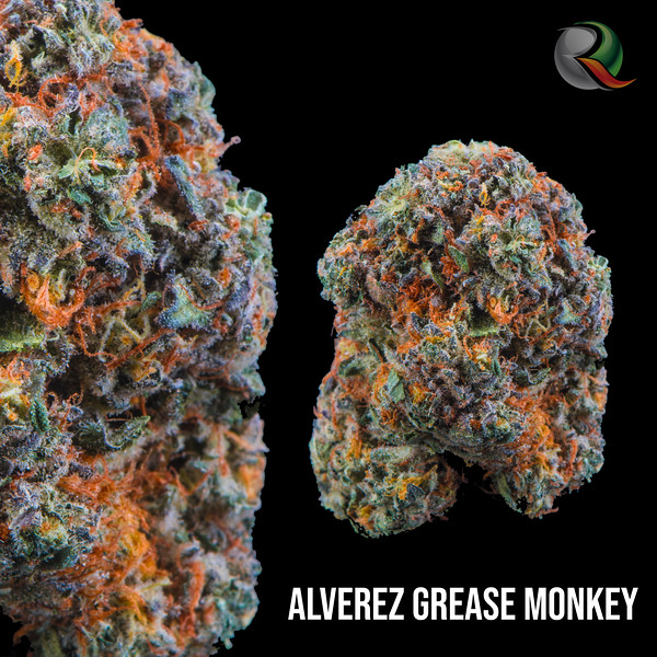 ALVEREZ GREASE MONKEY.jpg