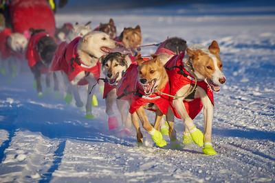 2018 Yukon Quest Sled Dog Race Start