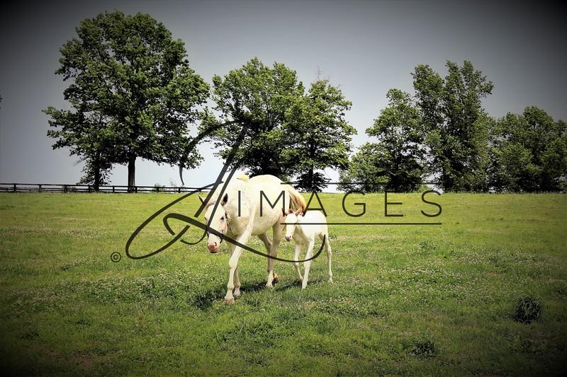 Megson Farm - Summer Photographs