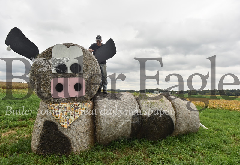 76204 A giant Hay bale art of a cow at Thiele Farm in Jefferson Twp