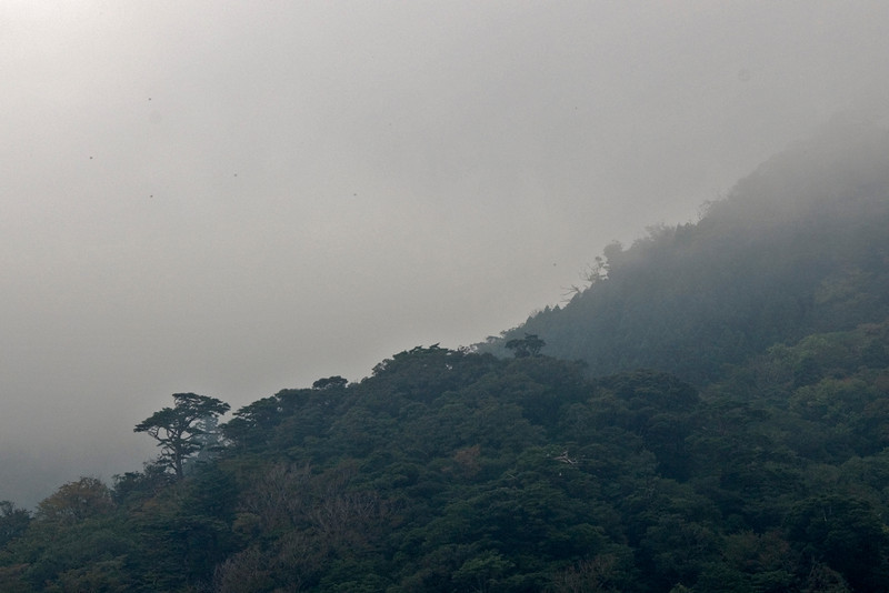 Fog covering the forest in Shiratani Unsuikyo in Yakushima, Japan