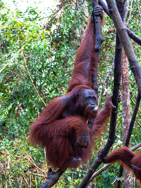2012.10.07_Borneo_DSC_6912-Edit-Juno Kim.jpg