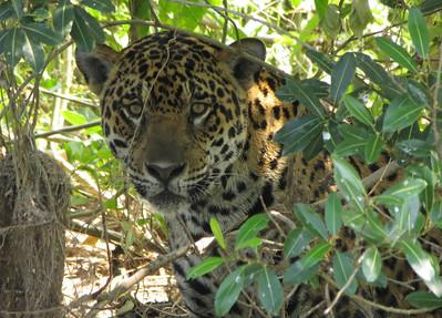 Brazil's Pantanal August 2012