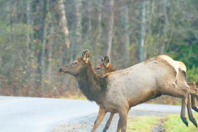 Elk PA