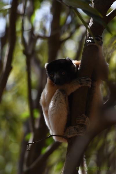 Madagascar 2017 (17)