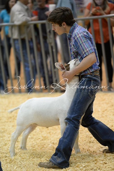 Market Goat Show