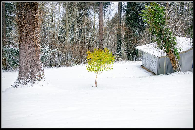 Little Tree Still Defying the Season
