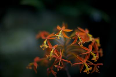 Olbrich Gardens 2013