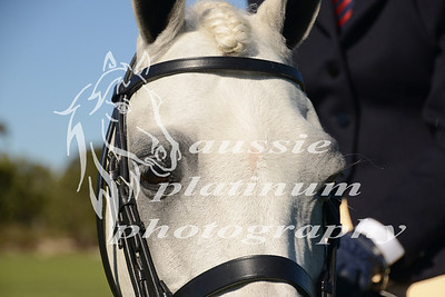 Class 5: Small Show Hunter Pony
