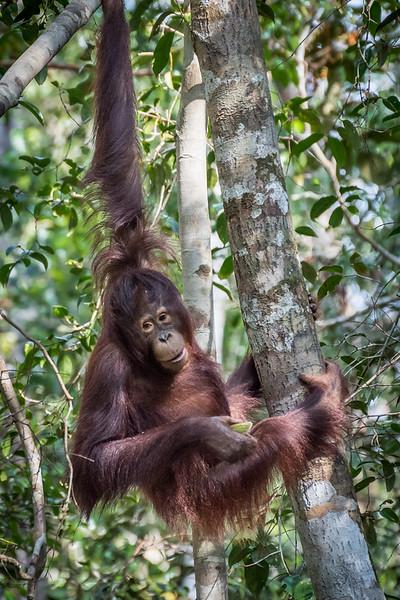Borneo-2266.jpg