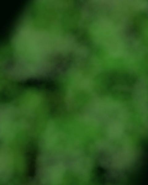 Deep Green Fog.jpg