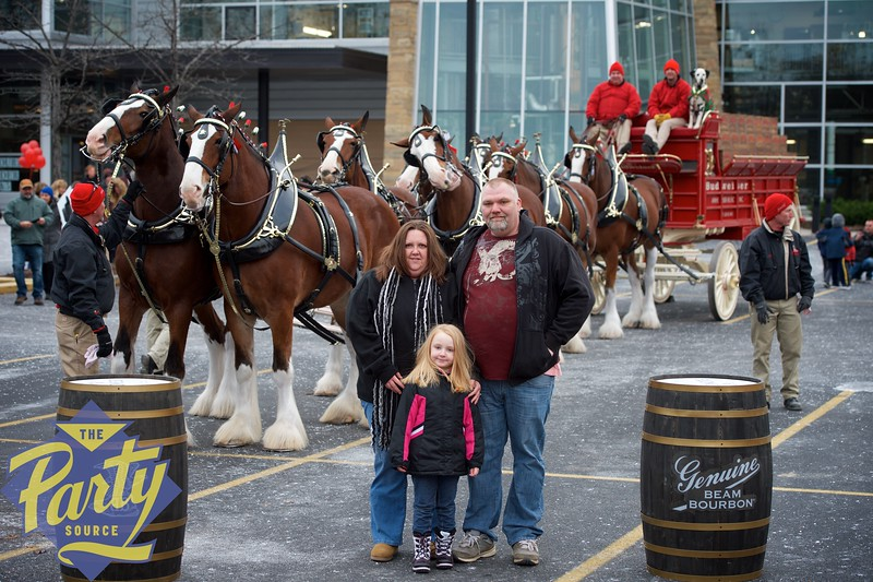Clydesdale Portraits 65.jpg