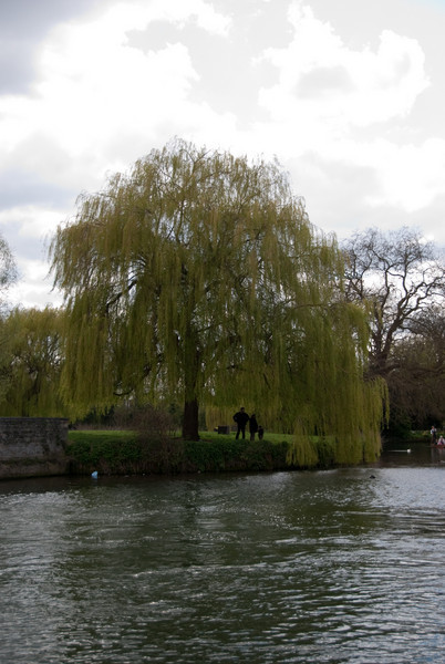 Some of the beautiful views along the river in Cambridge