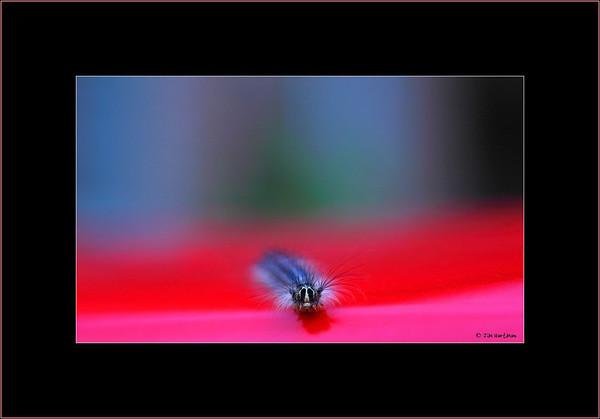 f2x black border crop tiff IMG_1523.jpg
