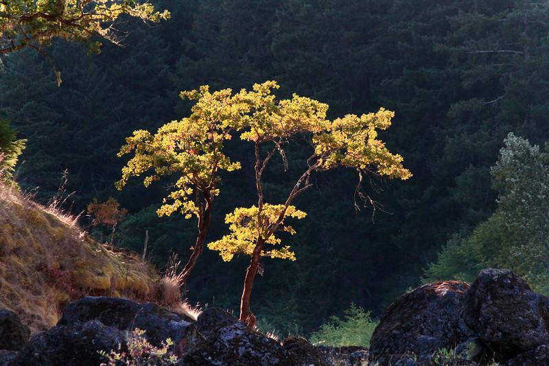 _MG_0803 side lite tree.jpg