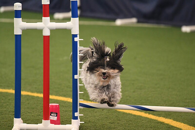 SOJAC AKC Agility Trial October 3-5