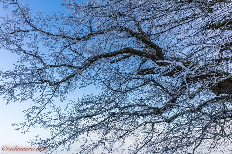 2017-12-07 Winter Boezberg - 0U5A0647.jpg