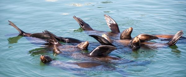 2012-04-29 Santa Cruz Island