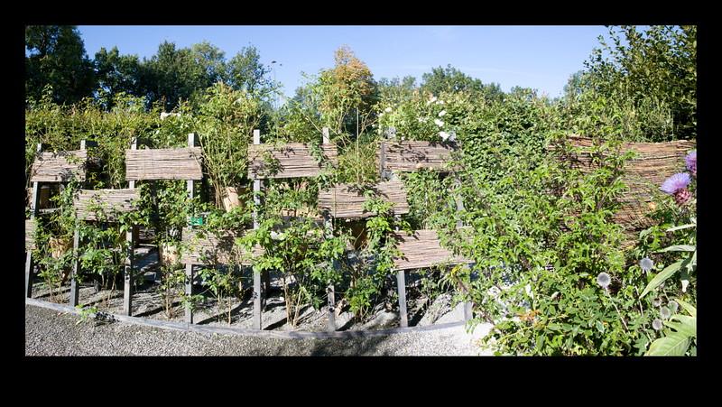 jardin X2 bis.JPG
