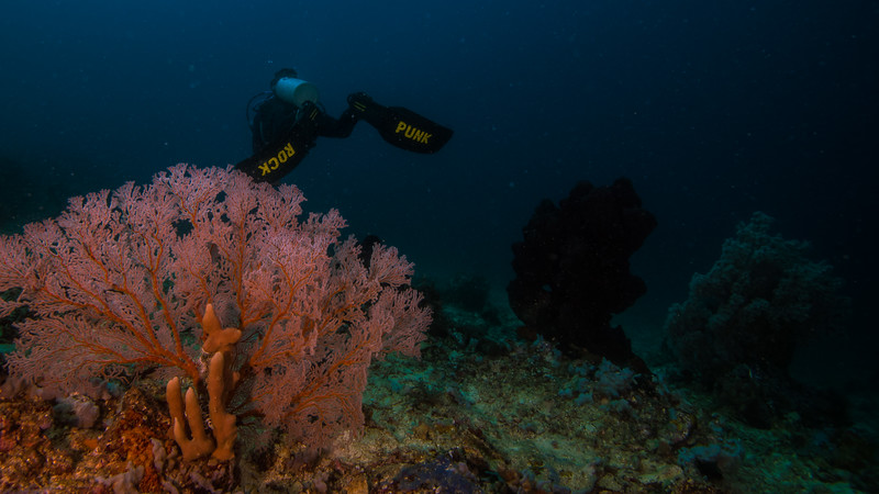 Taken at Doe-Doe divesite in Maitara Island, North Maluku, Indonesia during our 8D7N excursion in March 2018