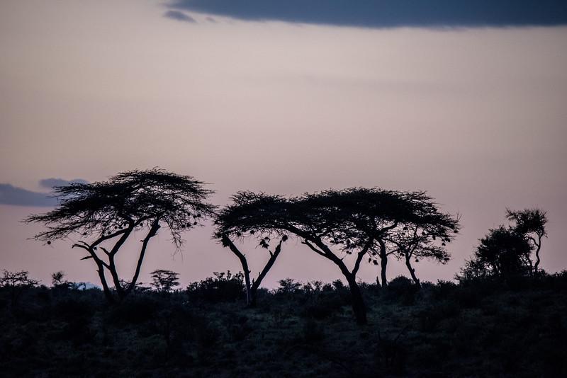 Samburu (25 of 70).jpg