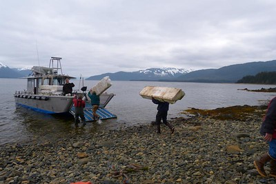 A Whole Boat Load of Styrofoam May 2013, Cynthia Meyer, Chichagof Island, Alaska