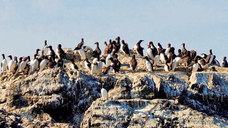 135 Sea Birds .jpg