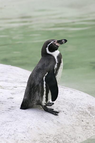 Newquay Zoo 224.jpg