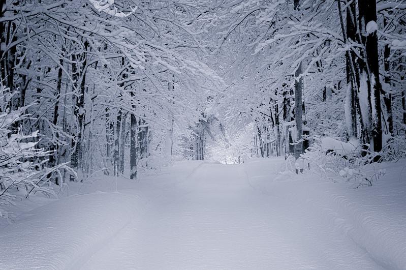 Winter scenes-9.jpg