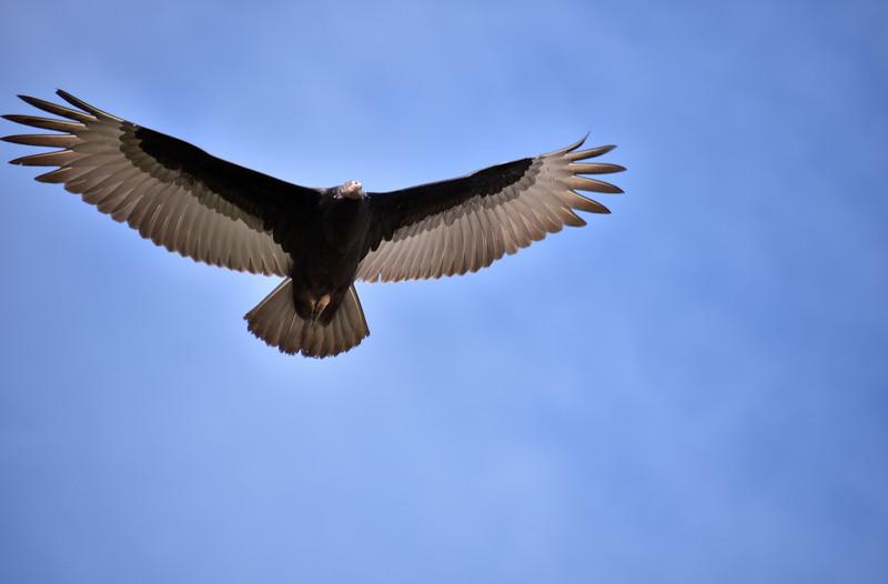 2016 valdivia wide wing good.jpg