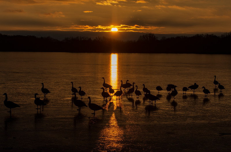 Sunset-Wingfoot-lake-geese2.jpg