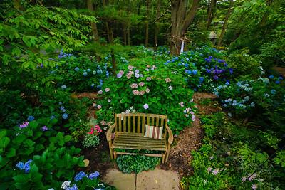 Hydranga Garden