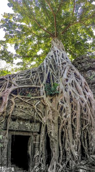 Cambodia-2018-1136.jpg