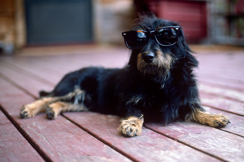 1-Dog-with-Sunglasses.jpg