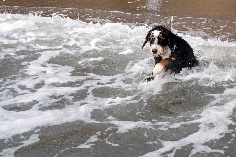 ocean beach quarantine 1160745-8-20.jpg