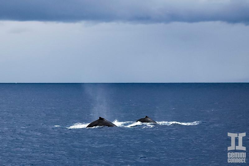 Whale 06.jpg