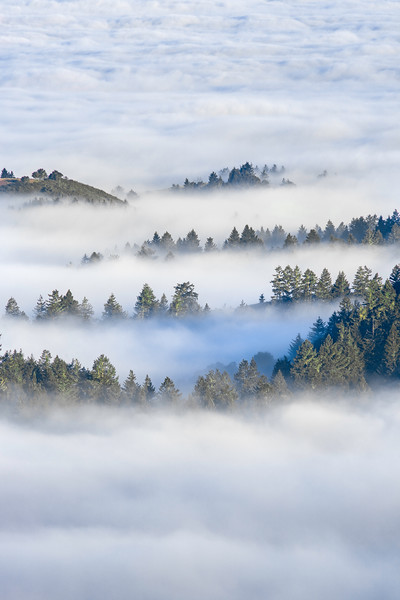 Redwood Heaven