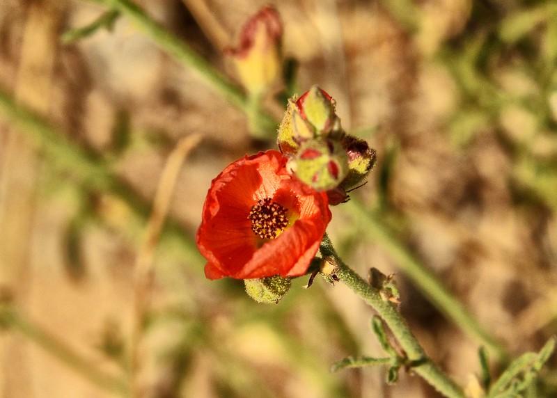 NEA_0834-7x5-Flowers.jpg