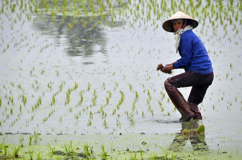 vietnam-flickr-copyright-archer10.jpg