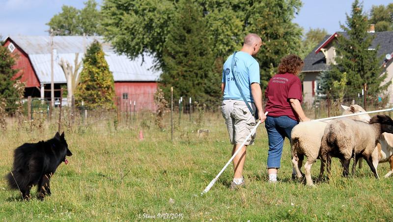 2015.9.27 Herding at Bonnies (50).JPG
