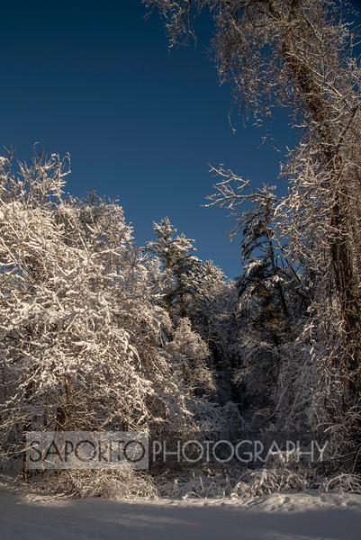 Bradley Palmer State Park - Fresh Snow