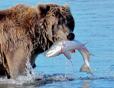 Alaska - Katmai Natonal Park